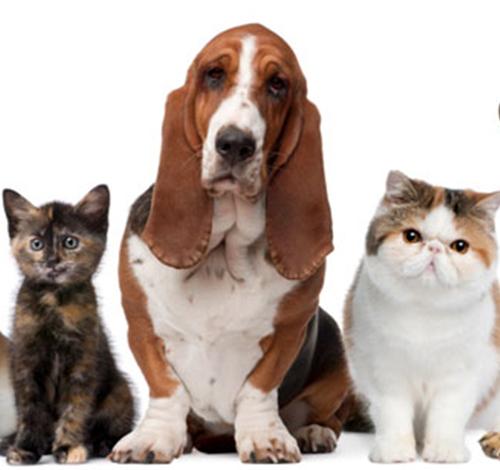 Vétérinaire val de joux